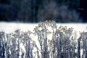 Winter perception. by Phototubby
