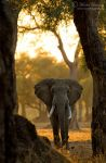 Through the Trees by MorkelErasmus