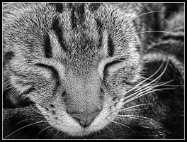 Nose Cat by kanes