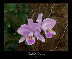 Orchid Twins by kaethor