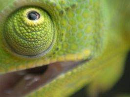 Cameleon's eye by msieurico