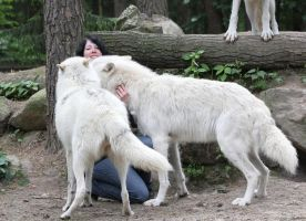 with wolves II by Tribolonotus