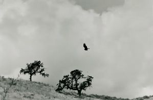 As The Crow Flies by IrishWandering