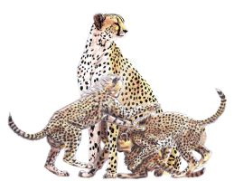 Cheetah Family by Rinzekatze