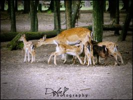 lunch-time by DolceePhotography