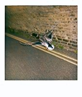 Flying Duck Polaroid by Tootsyclover