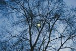 one with trees and a streetlamp at dusk by Maclunar