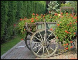 chariot... of roses by pery
