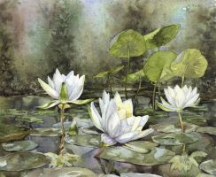 Waterlilies by colossusnz