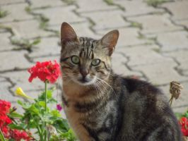 Cat and flower by h2okerim