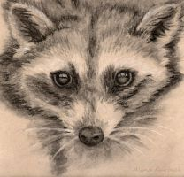 Raccoon by Dusty-Feather
