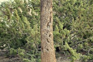 Joshua Tree Bark by dannypyle