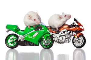 Motorcycle Mice by JamesBrey