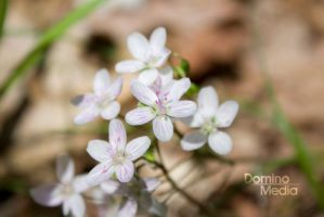 Flowers 1 by IDR-DoMiNo