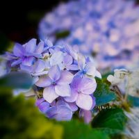 My Surreal Way of Flower 02 by itsLyla