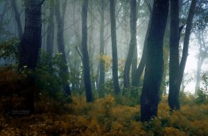 Mystical Forest by valiunic