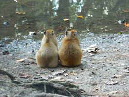 Two Baby Capybara by JennyM-Pics