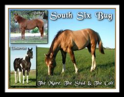 The Mare The Stud The Colt by GD-litenin
