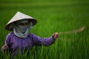 Rice Farmer by nnPhoto