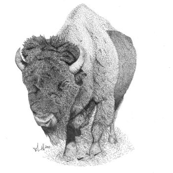 Bison by Faufar