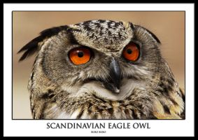 Scandinavian Eagle Owl by THEDOC4