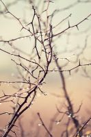 Raindrops on Branches.2 by jakelauer