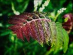 Allentown Fern by tmfNeurodancer