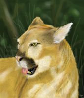 Cougar by neecolette