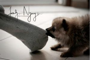 The day he discovered the sock by indie-click