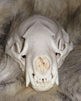 Badger SKull SOLD 8 by lamelobo