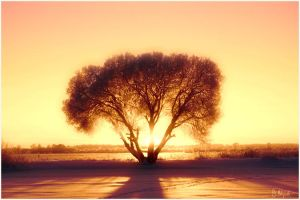 This was Winter IV-Surreal Sun by B-Hart