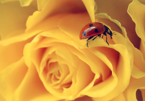 .:Ladybug on top:. by bogdanici