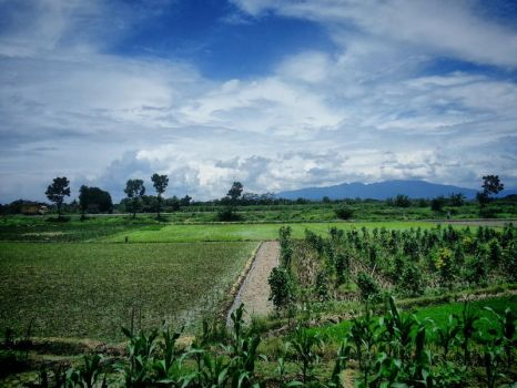 Indonesian fields by Danata