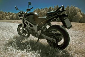 suzuki sv650 in  infrared no2 by Tschisi