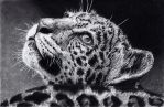 Jaguar Cub by ISG-Art