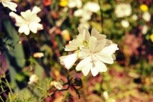 Pretty white flower by Squishy-1