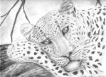 Lounging Leopard by studyforever