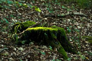 Glowing Stump Moss by SilooSweden