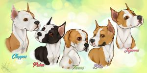 Cimar Puppies by GoPuppy