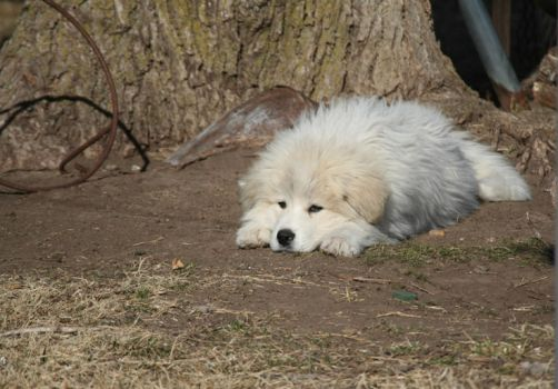 Sleepy Pyrenees by buckoff