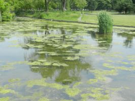 Chasing Monet by Flaherty56