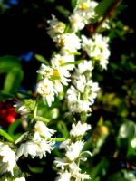 .Daisy Chain by BaronOfTheWillows