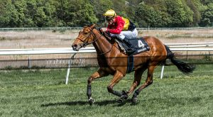 Horse Racing 428 by JullelinPhotography