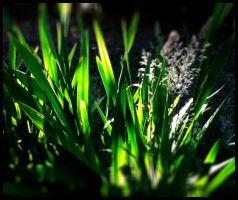 Through the Looking Grass by SophieAnna97