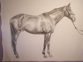 horse 72x88 inches by GSMESS