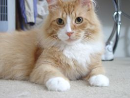 Yes, ANOTHER pic of my cat by beeliu