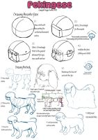 Pekingese Breed Guide - Part 2 by DoggieDoodles