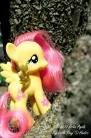 Fluttershy by Sombraluz-Images