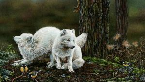 Arctic foxes by EsthervanHulsen