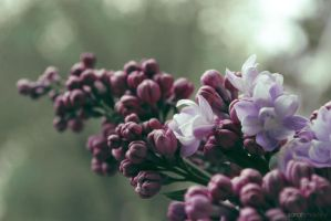 spring.token by sarah-marley